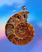 Steine nach Alphabet-Bündelung, Ammonit